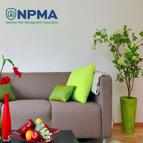 blog-npma-3