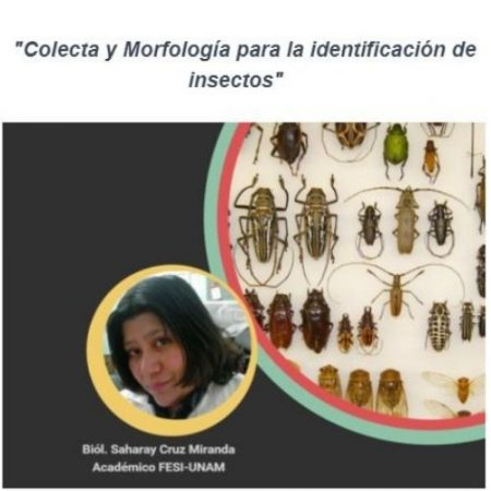 Morfología y colecta para identificación de insectos